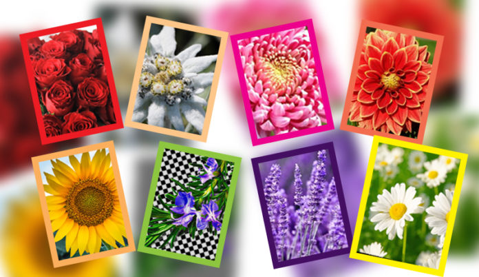 Beautiful Flowers And Their Surprising meaning of flowers